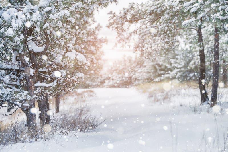 Opad śniegu w parku obrazy stock