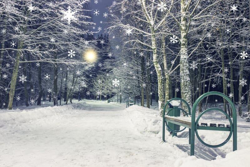 Opad śniegu w zimy nocy parku Nowego Roku i bożych narodzeń temat Krajobraz zima w mieście obrazy royalty free