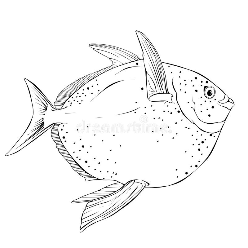 Opah Fish Vector Illustration stock photos