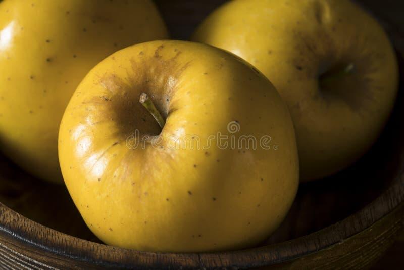 Opal Apples orgânico amarelo cru imagem de stock
