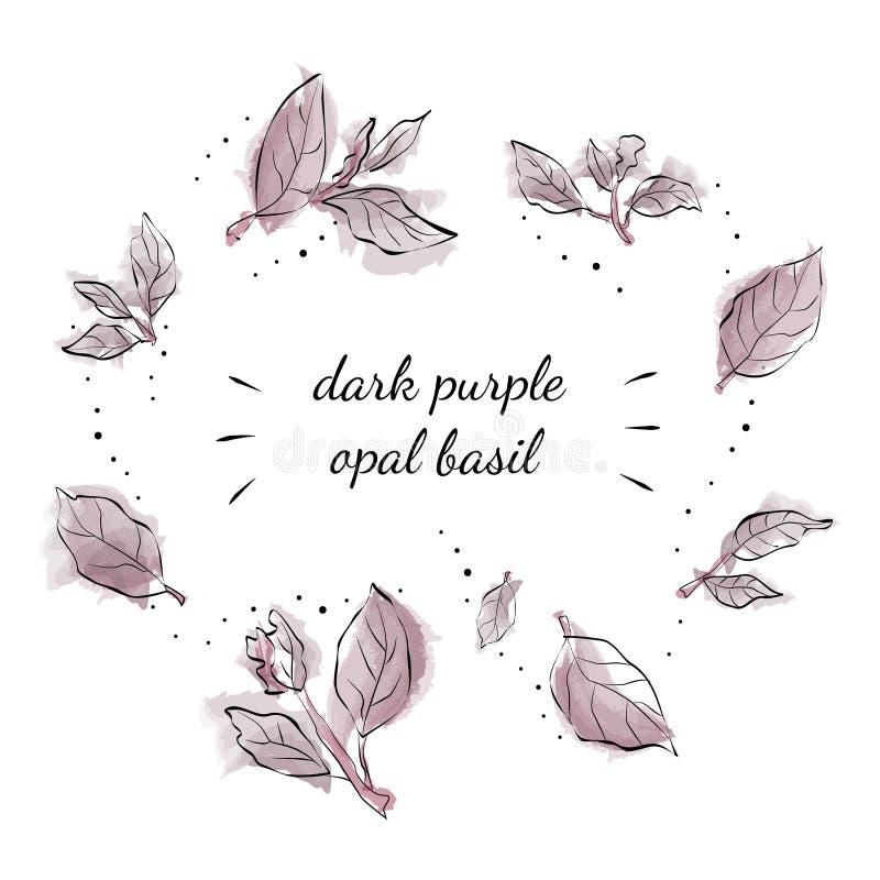 Opal Basil púrpura oscuro ilustración del vector