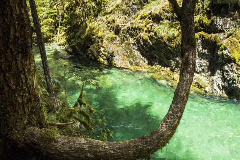 Opal Pool, Oregon stock image