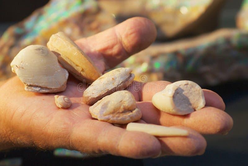 Opalas fósseis em uma palma do ` s do mineiro em Coober Pedy, Austrália foto de stock