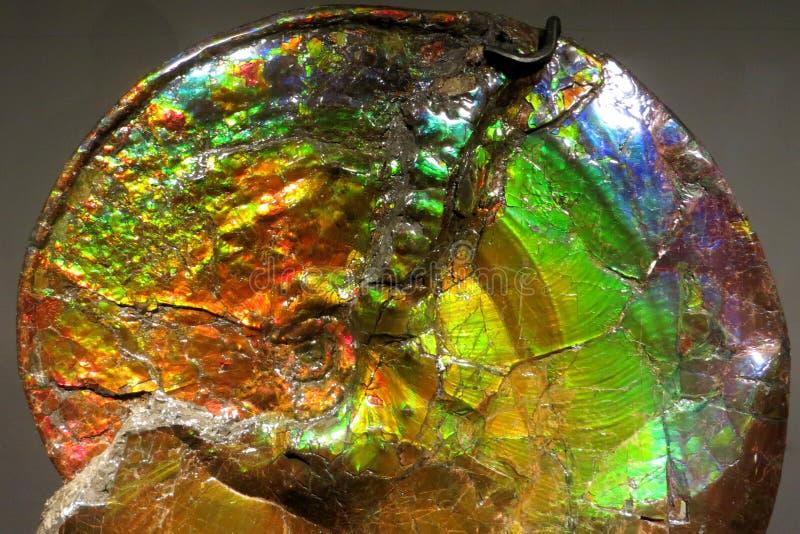 opalized ammonit arkivfoto