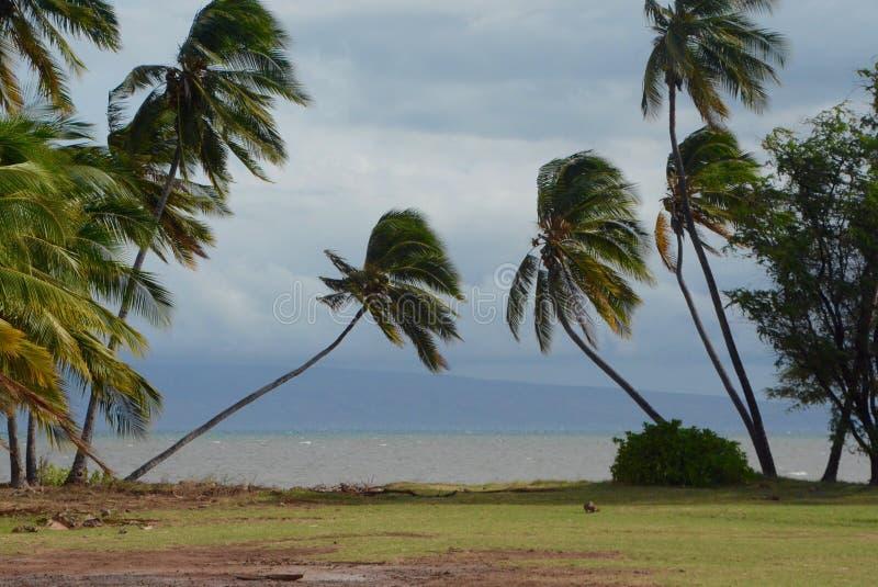 Oparte palmy przy parkiem na Molokai obrazy stock