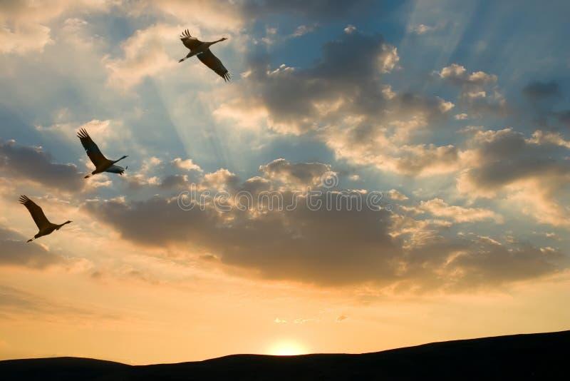 Opdracht aan zonsondergang stock fotografie