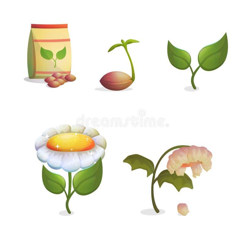 Opeenvolging van bloem de groeiende stadia royalty-vrije illustratie