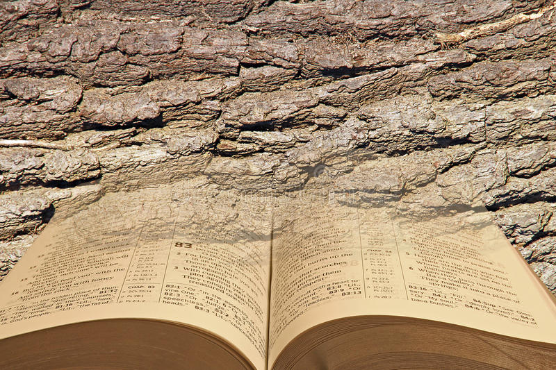 Open bible bark background. Photo of a modern bible with open pages against a bark textured background ideal for own text etc royalty free stock image