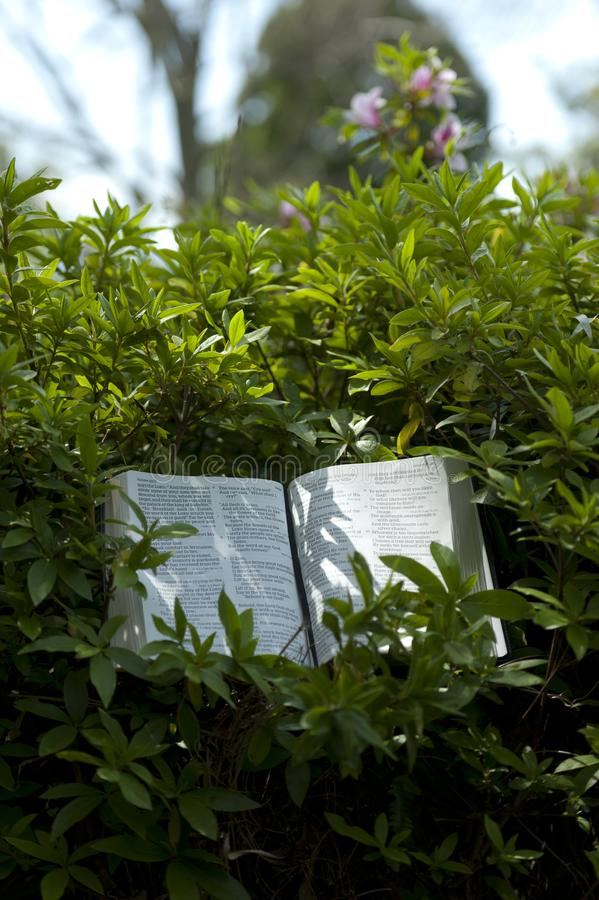 Open Bible in Isaiah chapter 40 outdoors, among green leaves. Background blurred with azalea flowers and sky. Vertical shot stock photos