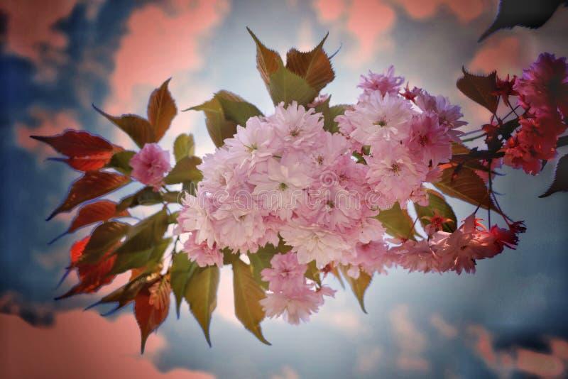 Open bloemen om de schoonheid van het ogenblik te registreren royalty-vrije stock foto