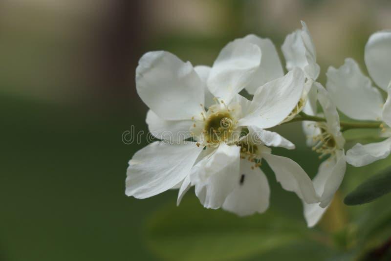Open bloemen om de schoonheid van het ogenblik te registreren stock foto's