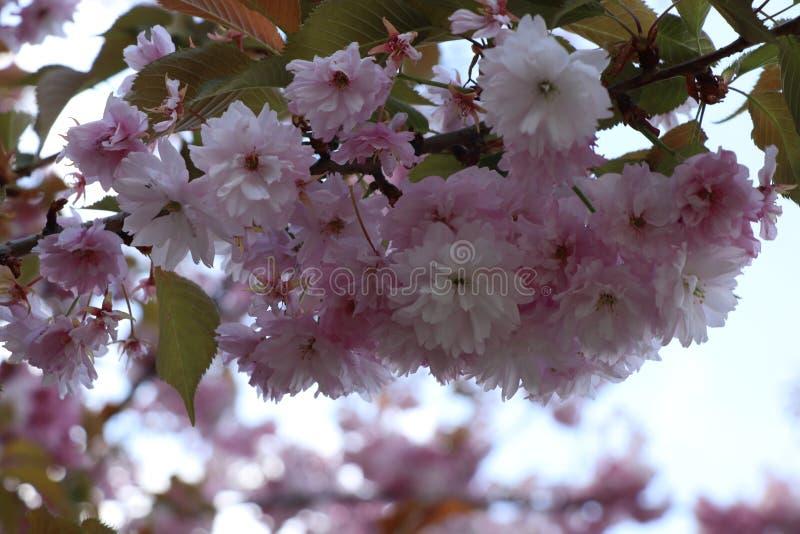 Open bloemen om de schoonheid van het ogenblik te registreren stock afbeelding