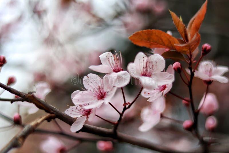 Open bloemen om de schoonheid van het ogenblik te registreren stock fotografie