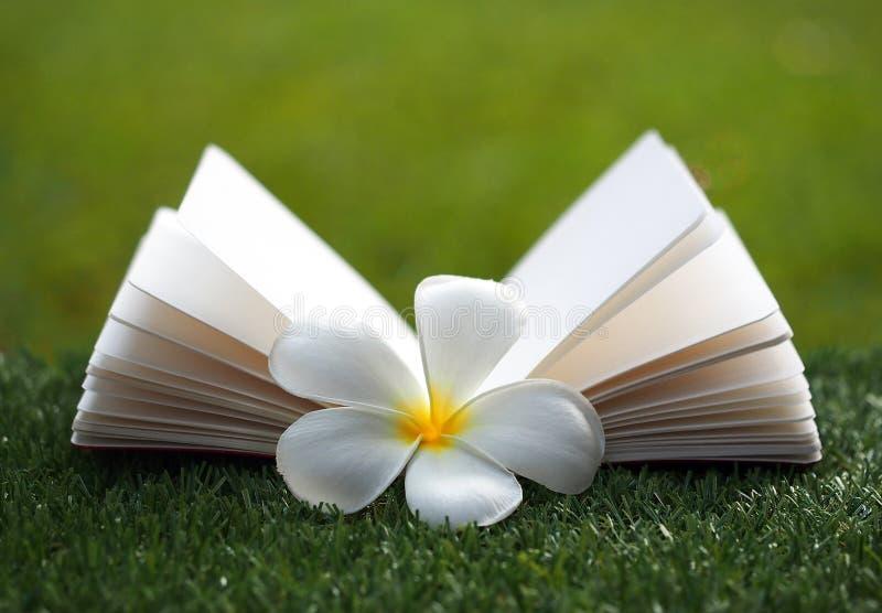 Open boek met bloem op gras stock fotografie