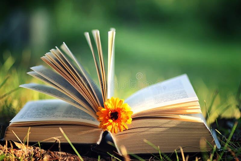 Open boek met bloem op gras royalty-vrije stock foto's