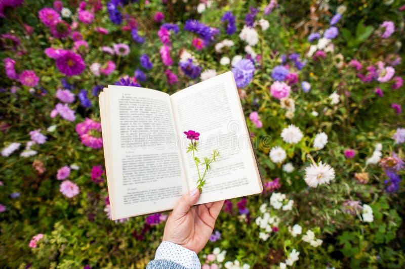 An open book royalty free stock photos
