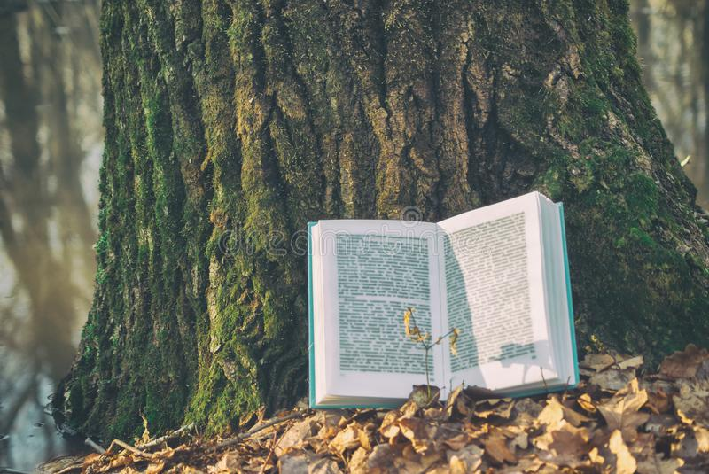 Open book in blue bound lying on a dry leaves. Background texture bark tree in spring nature forest lake. pages blurry sunlight royalty free stock images
