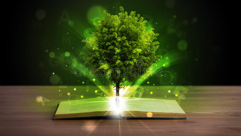 Open book with magical green tree and rays of light. On wooden deck royalty free stock photos