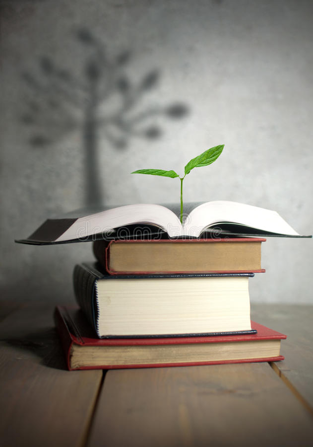Open book seedling with tree shadow stock photo