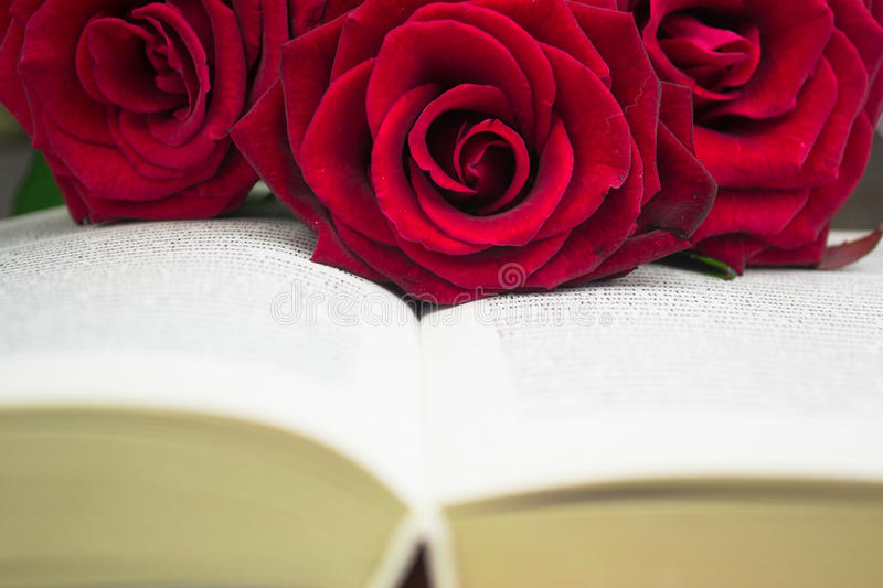 The open book and red roses. royalty free stock photos