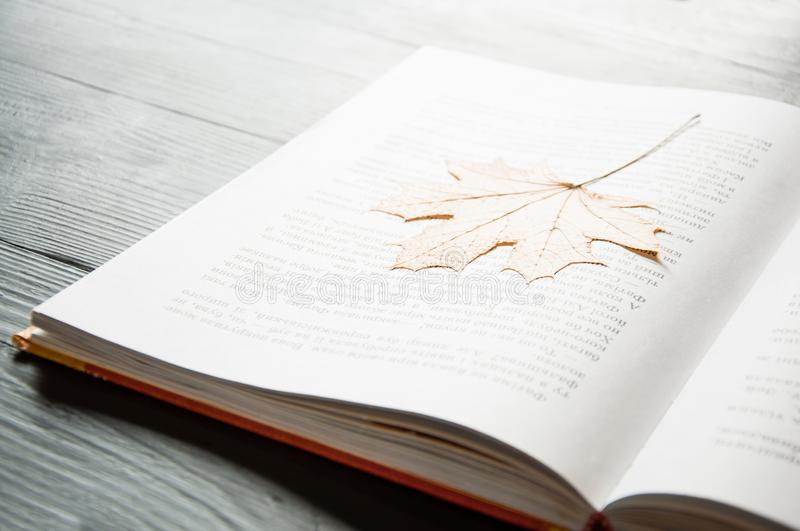 An open book is on the table. On a dark background. Close-up. stock photography