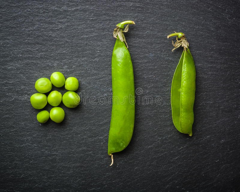 Open and closed Pellets of green peas on a black stone background. Fresh fruits. Harvesting. Copy space. stock photo