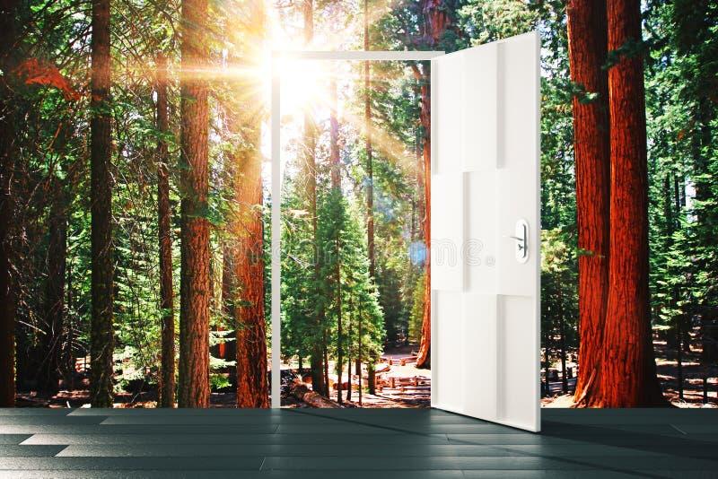 Open deur aan het zonnige bosconcept stock afbeeldingen