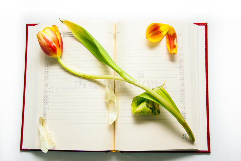 Open diary note with red-yellow tulip royalty free stock photos