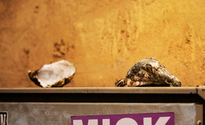 Open empty oyster shells on electricity box on yellow wall background stock images