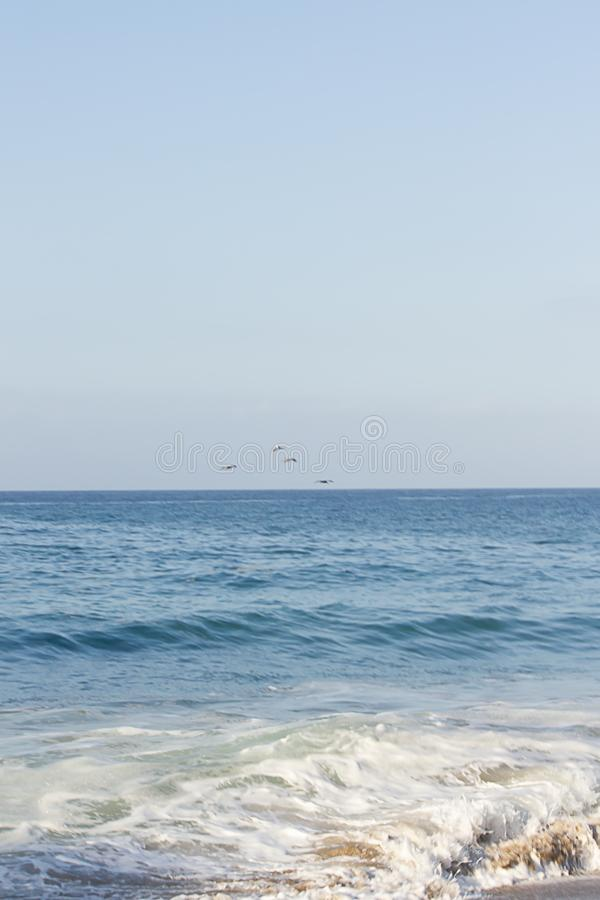 Open expanse of blue water highlighted with sunlight flock of pelicans flying royalty free stock photos