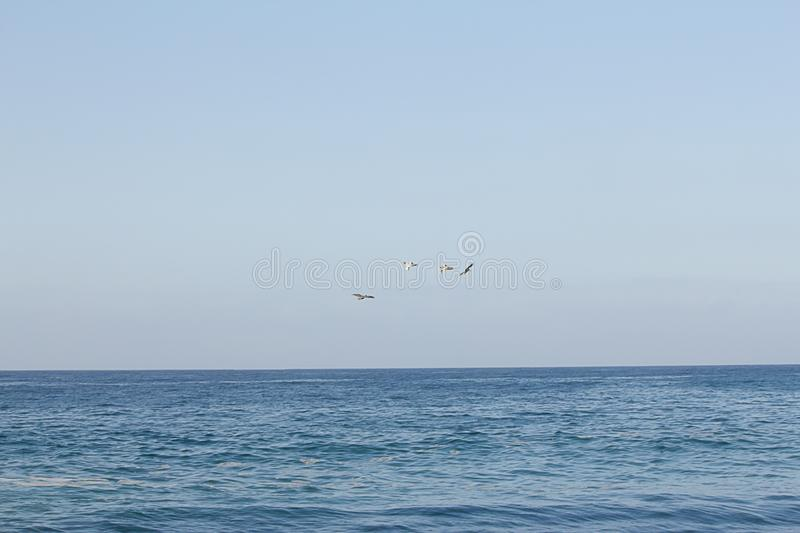 Open expanse of blue water highlighted with sunlight flock of pelicans flying stock image