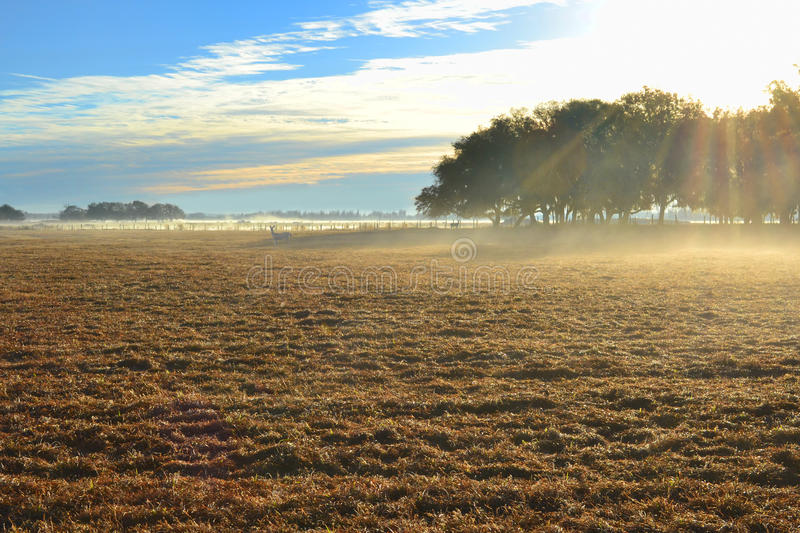 Download Open Field stock photo. Image of trees, sunny, grass - 18597674