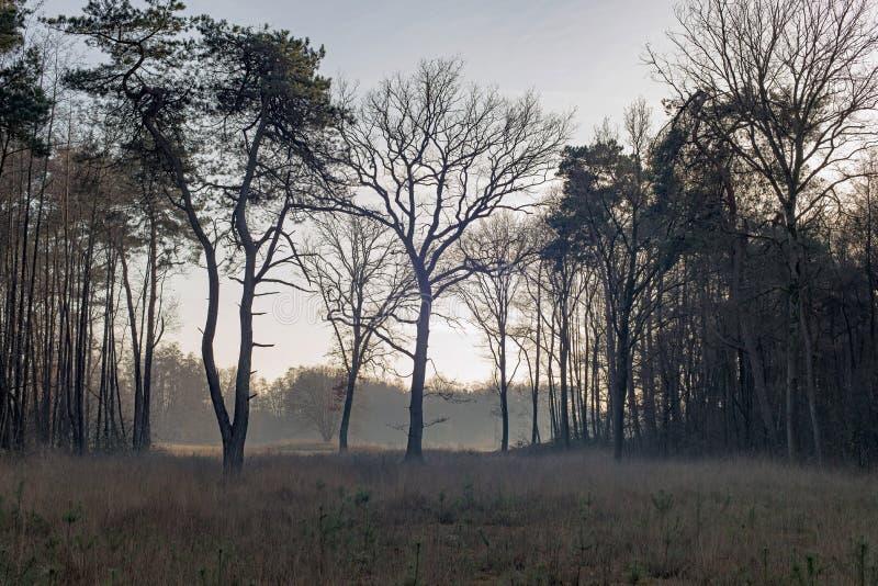 Open field in misty winter forest. Nature reserve Needse Achterveld. Gelderland. The Netherlands. stock image