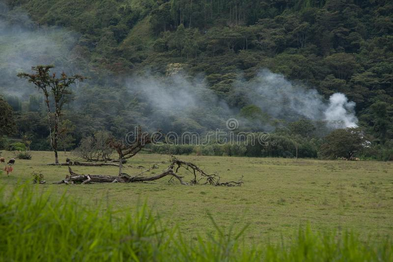 Open fire in a forest. Smoke of open fire in the forest stock photos