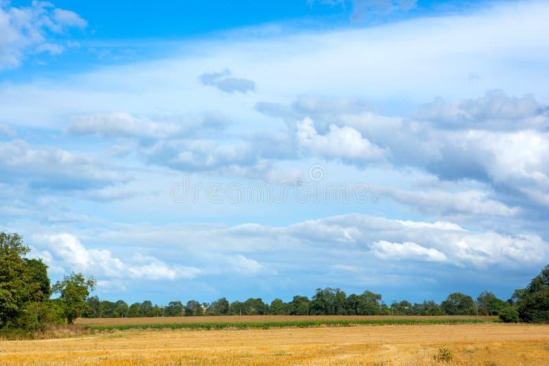 Open geel gebied bij de zomerplatteland stock afbeelding