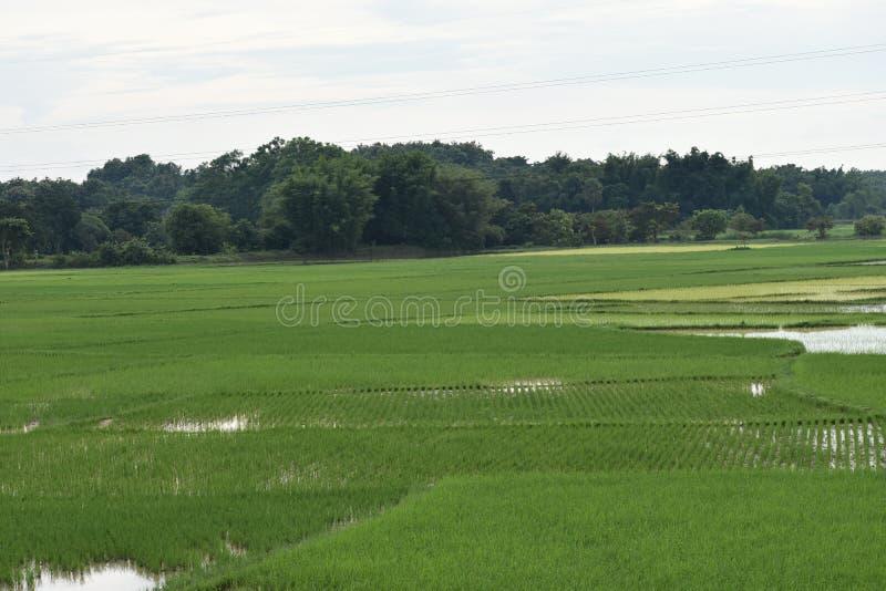 Open green field bangladesh royalty free stock photos