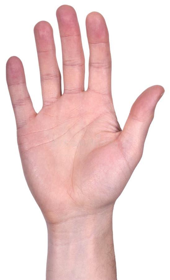 Open Hand, Palm aan Camera met Geïsoleerde Vingers, stock afbeeldingen