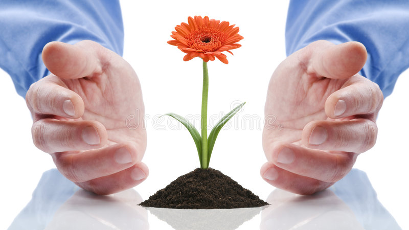 Open hands with gerber daisy royalty free stock image