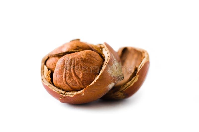Open hazelnut stock images