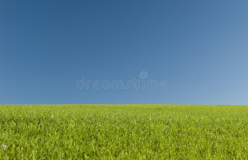 Open meadow royalty free stock images