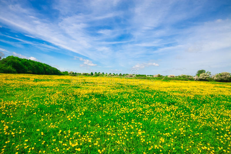 Open Meadow stock photography
