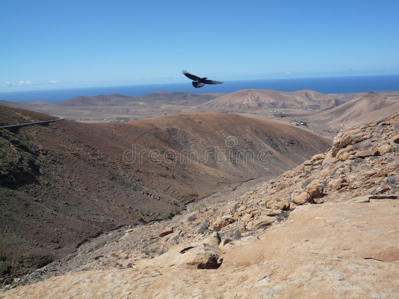 Open Mountain window view with bird in Fuerteventura Canary/islands. Mountain view in Fuerteventura Canary/islands with blue sky stock photos