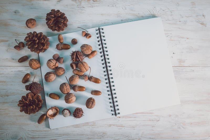Open notitieboekje met eikels en kegels royalty-vrije stock afbeelding