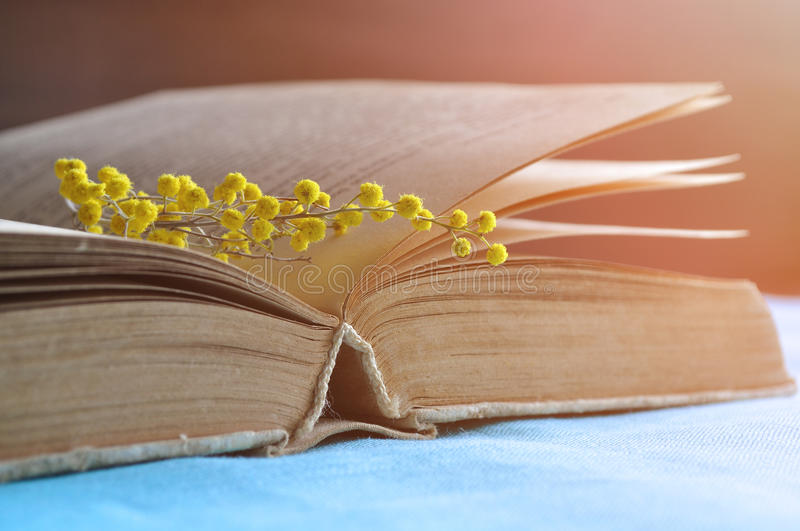 Open old book with yellow mimosa flowers on the table under warm sunlight - spring still life in soft natural pastel tones. Spring still life - open old book royalty free stock photos