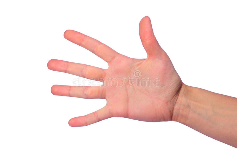 Open palm. Isolated open female's palm with five fingers stock photo