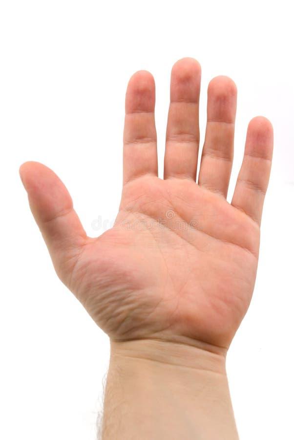 Free Open Palm Stock Image - 2315331