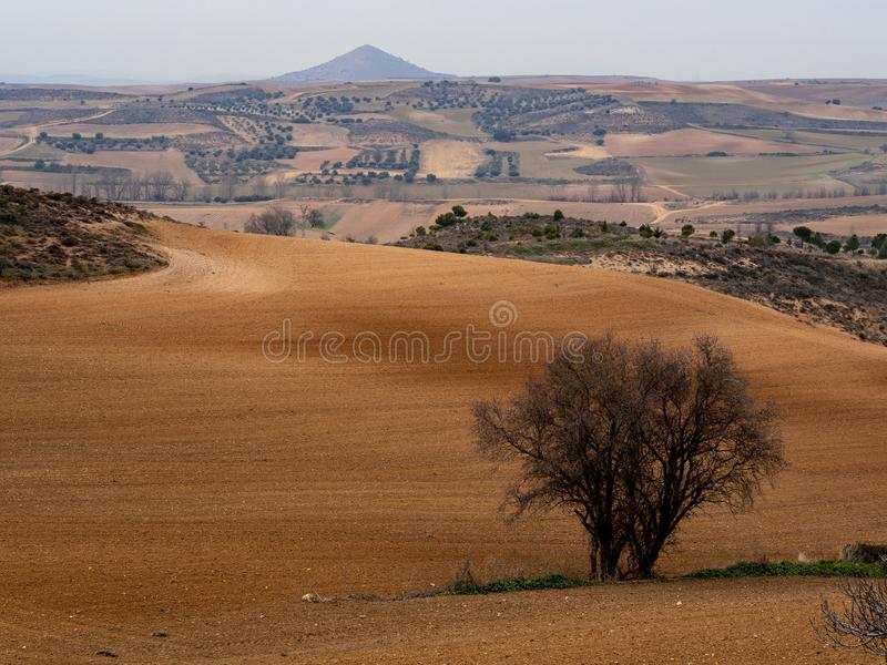 Open plain in Hita, Spain. Open plain with a tree on one side in Hita, Spain stock photography