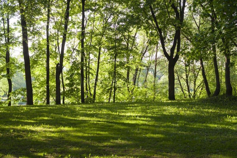 Open plek in het bos bij de lenteochtend Achtergrond, aard royalty-vrije stock afbeeldingen