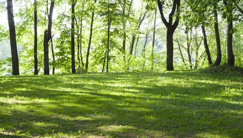 Open plek in het bos bij de lenteochtend Achtergrond, aard royalty-vrije stock foto's