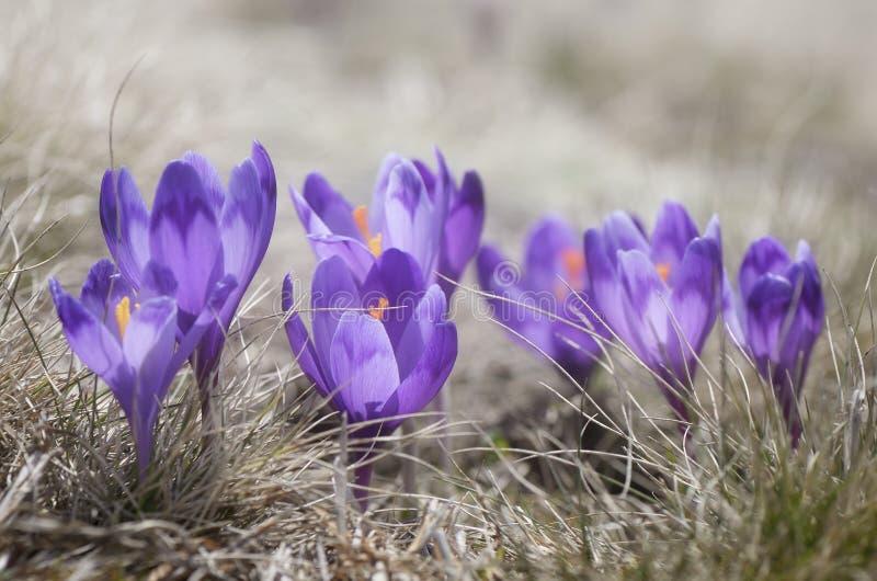 Open plek met bloemen stock foto